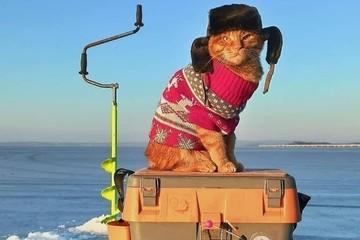 Рыжий кот в шапке-ушанке, сопровождающий хозяина на рыбалке, умилил соцсети