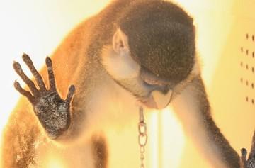 «Без слез не взглянешь»: на Урале организаторов выставки животных обвинили в жестоком обращении над обезьянами и крокодилом