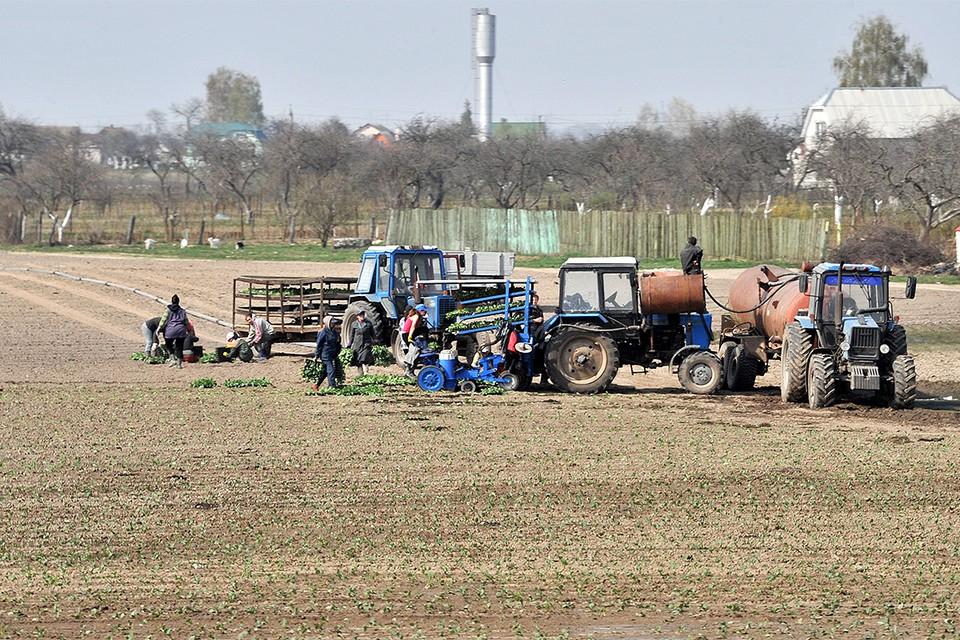 Главная проблема, с которой столкнулись сельхозчиновники и фермеры - господдержка начинающих аграриев.