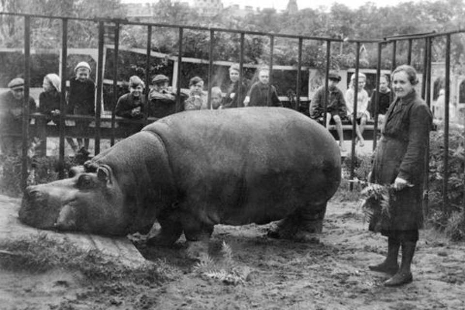 Ленинградский зоопарк рассказал о животных, переживших блокаду / Фото: Ленинградский зоопарк
