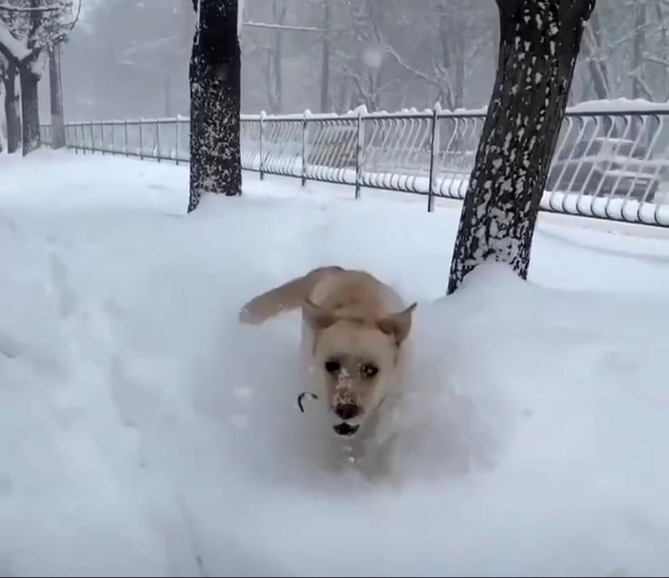 Собаки радуются зиме, как малые дети. Фото: кадр видео Черный список Симферополь/VK