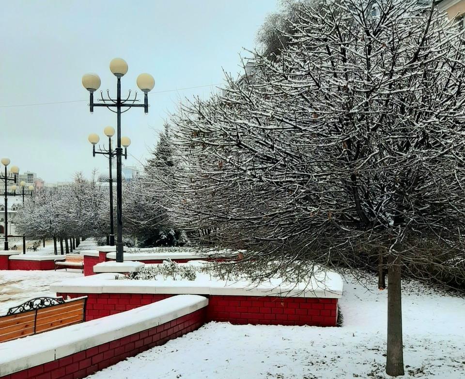 Врио губернатора Белгородской области обратил внимание на однообразие деревьев в регионе.