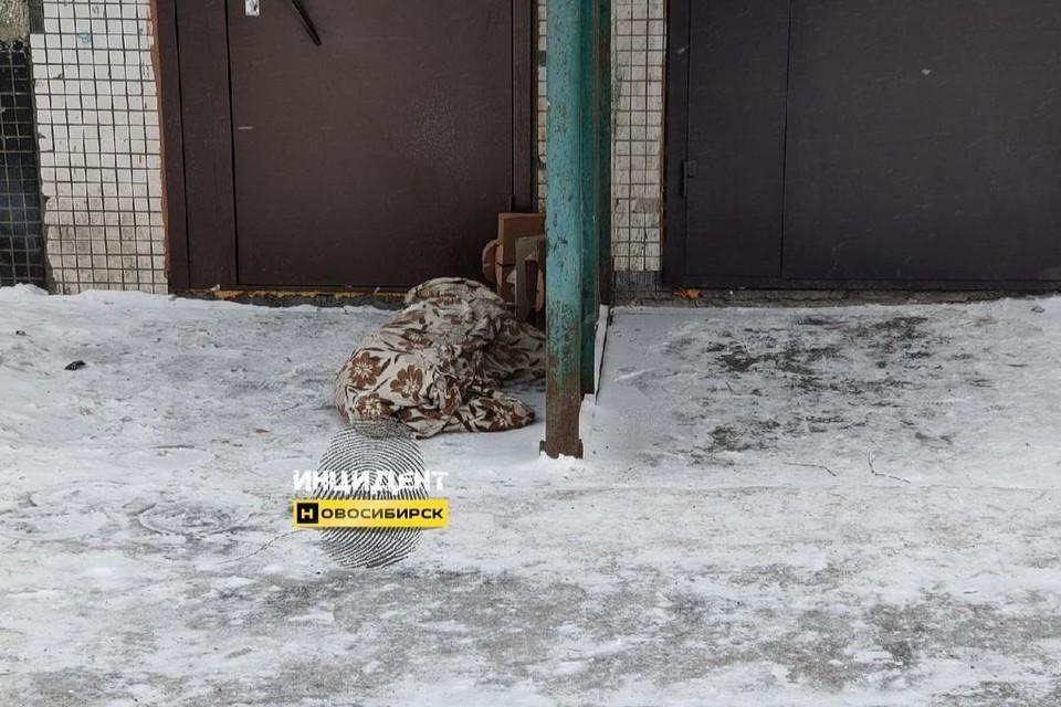 """Погибшего питомца хозяева просто бросили у подъезда. Фото: """"Инцидент Новосибирск"""""""