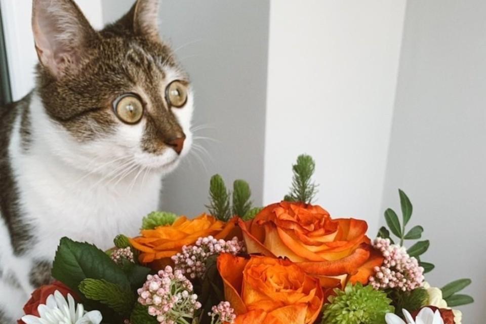 Всего за пару месяцев у котика появилась своя «армия» фоловеров