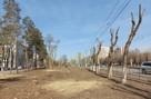 Одни пеньки: на проспекте Жукова в Волгограде рубят деревья