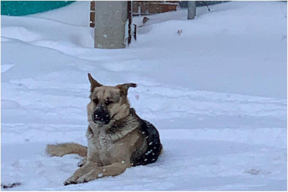 Собака ждет хозяина. Фото: Светлана Миколайчук/VK