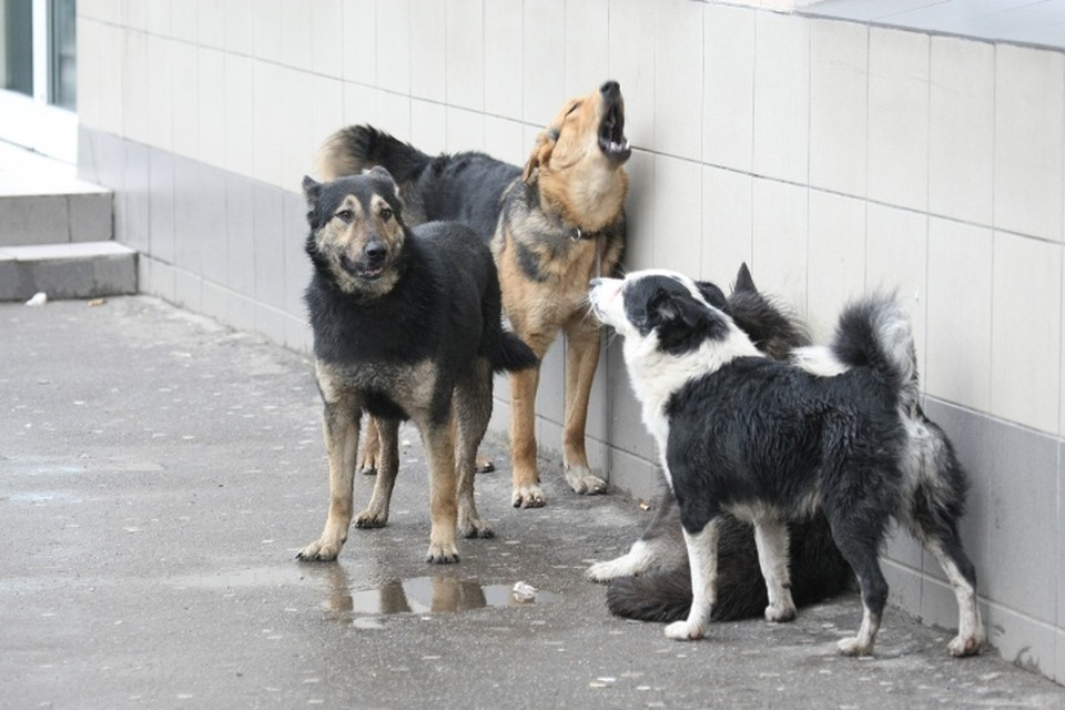 Пять миллионов рублей потратят в Новокузнецке на бездомных животных