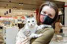 «Леди постоянно что-то смотрит на планшете»: звездой TikTok Family А1 стала кошка с тремя лапами