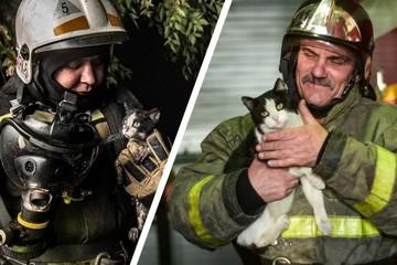 Как сложилась судьба котенка, спасенного из огня новосибирскими пожарными, и почему его назвали Гидрантом