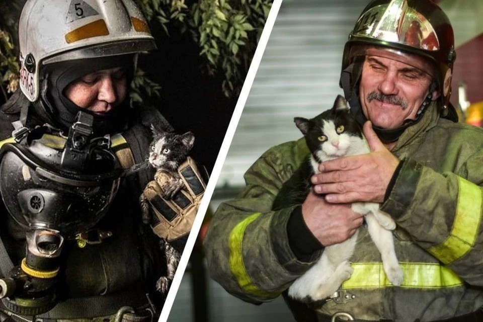 Котенка спасли от пожара 2,5 года назад. Фото: Алена МАРТЫНОВА / Виктор Боровских