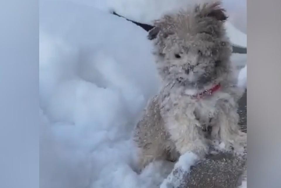 Выскочивший на улицу щенок чуть не утонул в сугробе