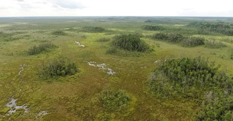 Ольманские болота. Фото Валерия Домбровского