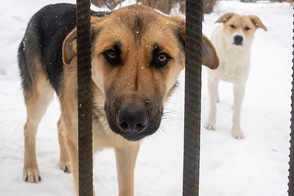 В Общественной палате прошли слушания по новому закону об обращении с бездомными животными.
