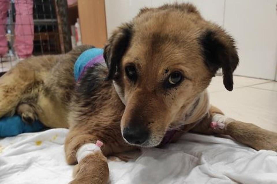 Пса с перерезанным горлом нашли на АЗС в минувшие выходные. Фото: Андрей Елисеев/facebook