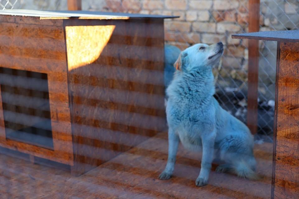 Синих собак из Дзержинска взяли «на работу» в местную администрацию.