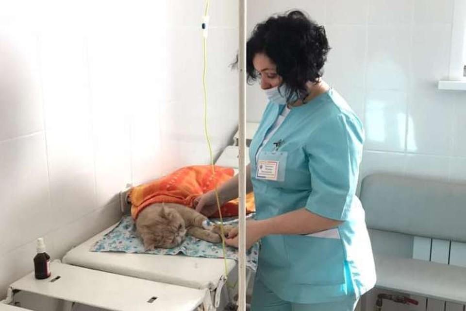 Винни с иголкой в животе пришлось спасать кемеровским ветеринарам. ФОТО: инстаграм Кузбасской станции по борьбе с болезнями животных.