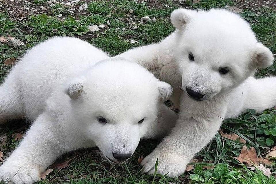 Малыши уже подросли. Фото: @safari_park_gelendzhik