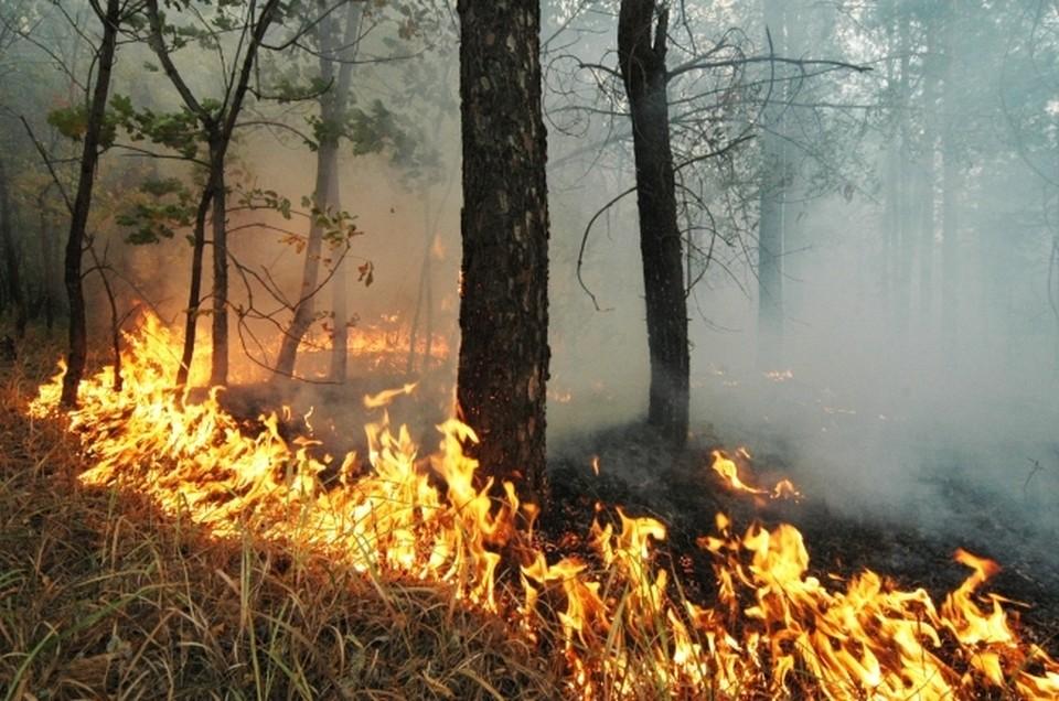 с 1 по 5 апреля на территории ДФО ликвидировано 63 лесных пожара на площади 4143 гектара