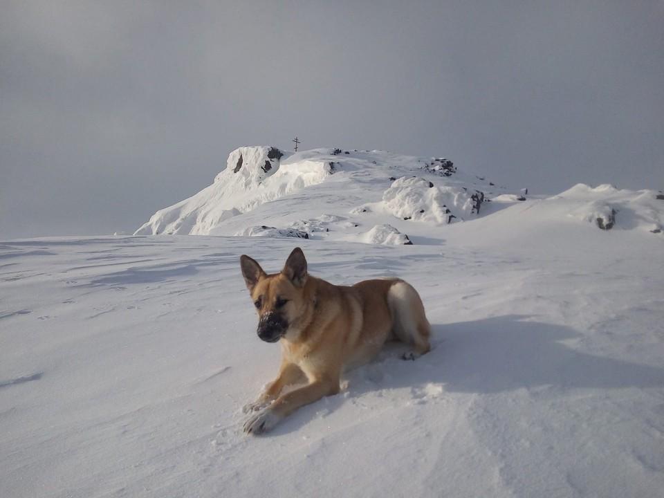 Для Фроси склон горы Кукисвумчорр был домом. Фото: vk.com/hibinskiybrodyaga