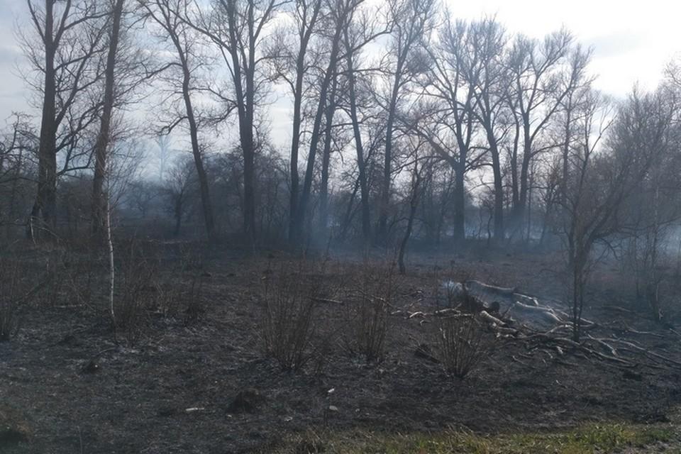 Больше 70 раз выезжали пожарные на тушение сухой травы в Брянской области за субботу, 10 апреля.