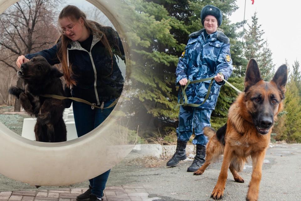 У Екатерины две собаки - домашняя по кличке Стив и служебная - Зита.