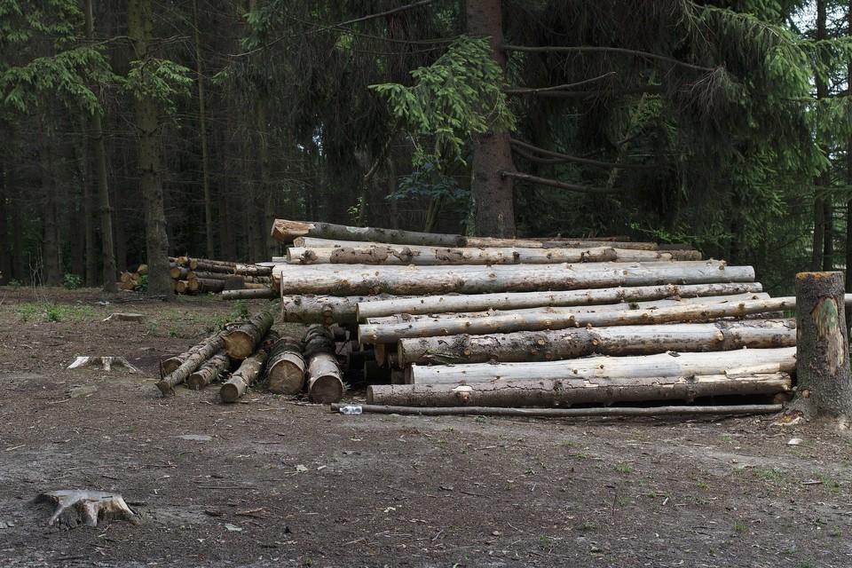 8 незарегистрированных пилорам обнаружили на территории Удмуртии в рамках акции «Лесовоз»