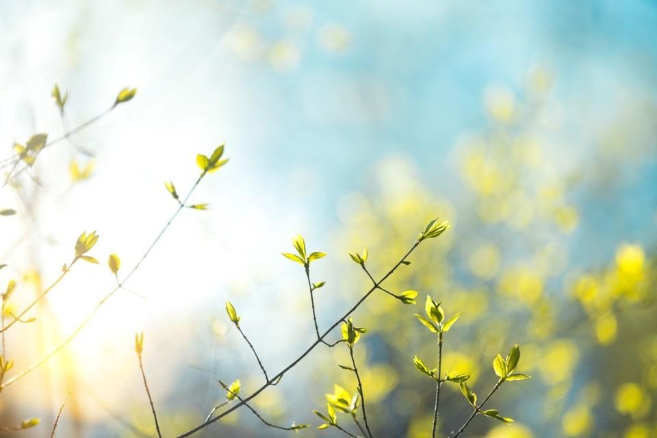 Ждем стабильную солнечную погоду! Фото: соцсети