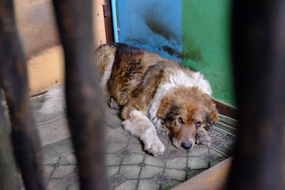 Брошенный пес Бося