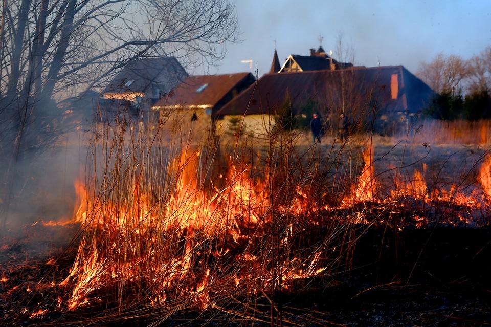 Растительность выгорела на площади 50 квадратных метров.