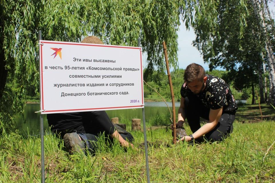 Высадка ив в честь юбилея «Комсомолки» в прошлом году