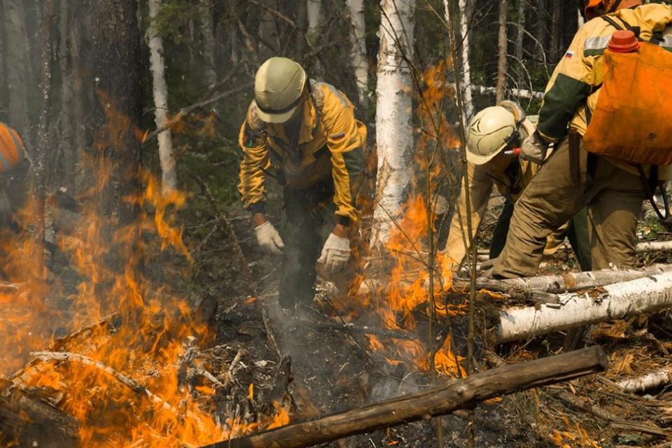 Лесные пожары в Иркутской области 2021: когда и где будет гореть тайга. Фото: пресс-служба Авиалесоохраны.