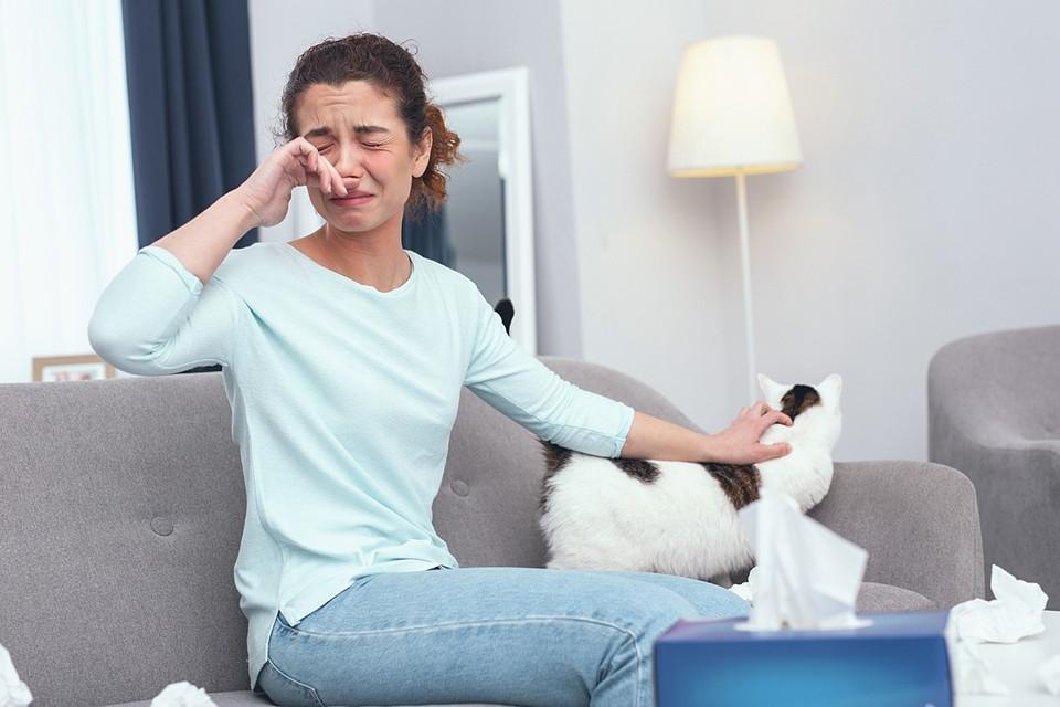Многочисленные исследования показали, что при аллергии на кошку можно получить обострения при контакте с человеком, у которого живет животное