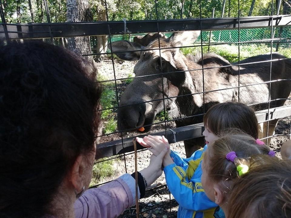 В Хабаровске зоотерапию развивают уже не первый год