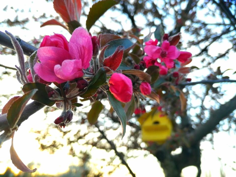 В Крыму весной все в цвету.