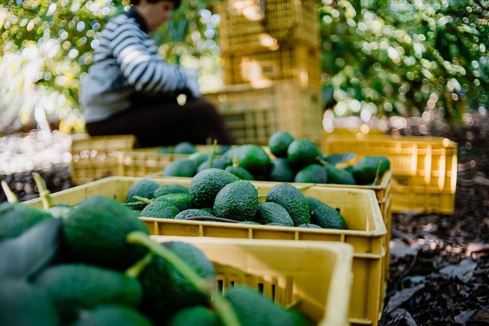 Сокращение поставок неминуемо приведет к росту цен на эти плоды
