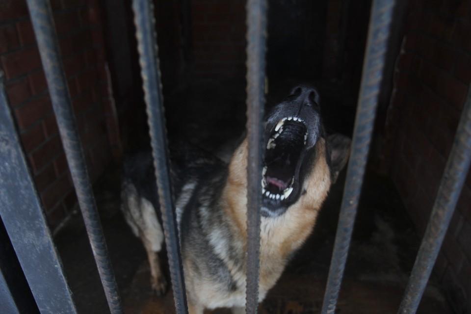 Две собаки покусали восьмилетнюю девочку более 100 раз.