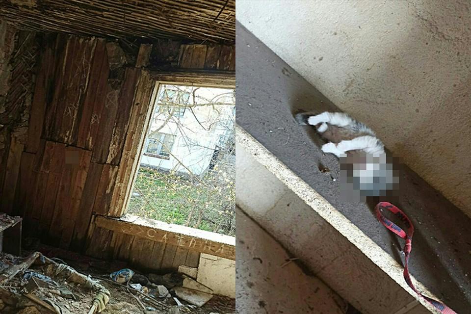 Местные жители предполагают, что котят замучили подростки-сатанисты Фото: vk.com/tverhelpanimals