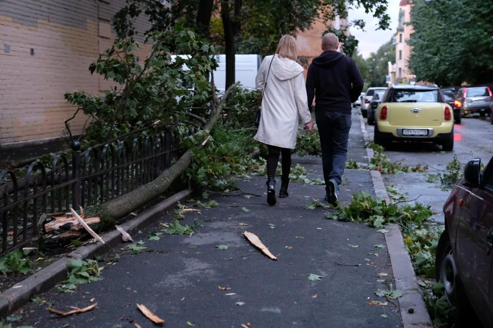 За сутки буйства ветра в дежурную службу поступила лишь одна заявка: в Сестрорецке рухнуло дерево.