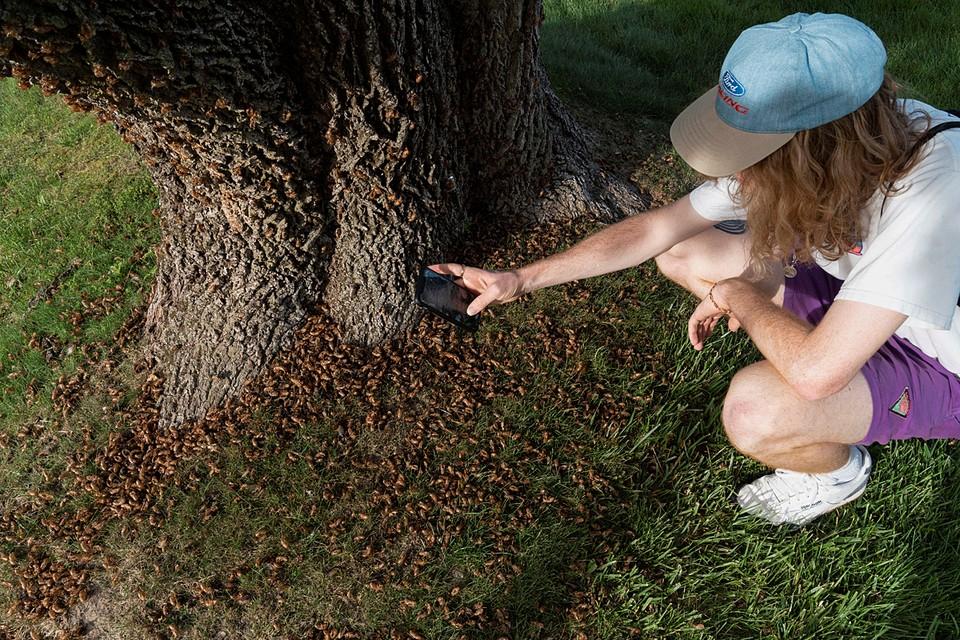 О появлении большого количества насекомых уже заявили жители Джорджии, Вирджинии и Мэриленда