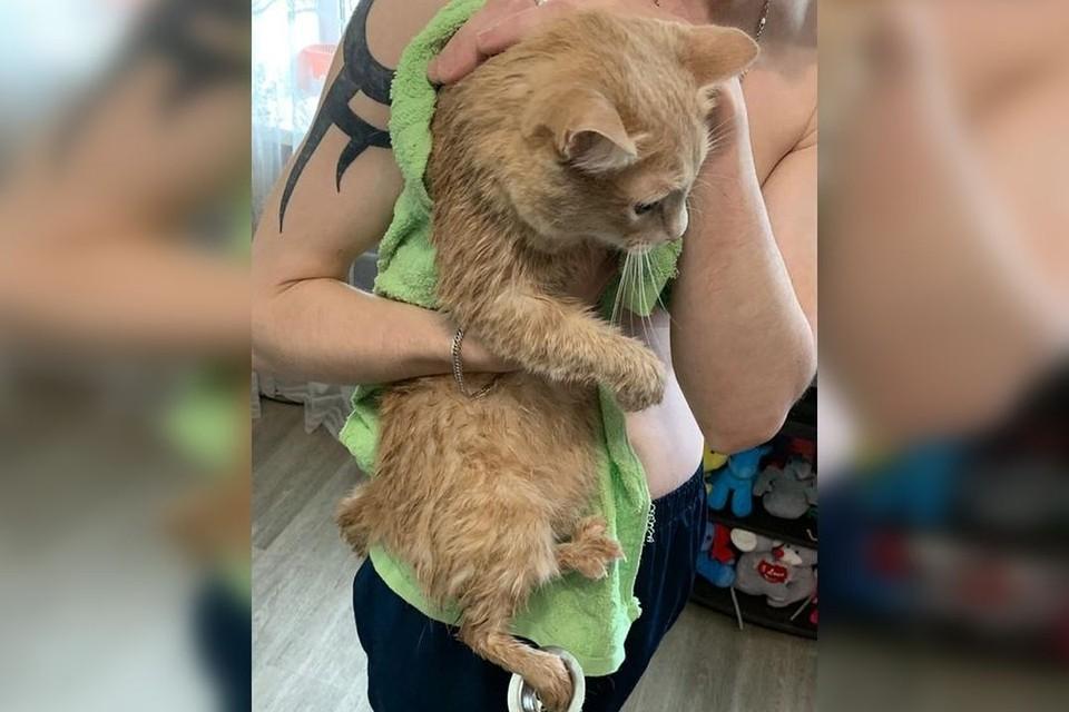Рыжий кот едва не остался без лапы. Фото: предоставлено муниципальной аварийно-спасательной службой