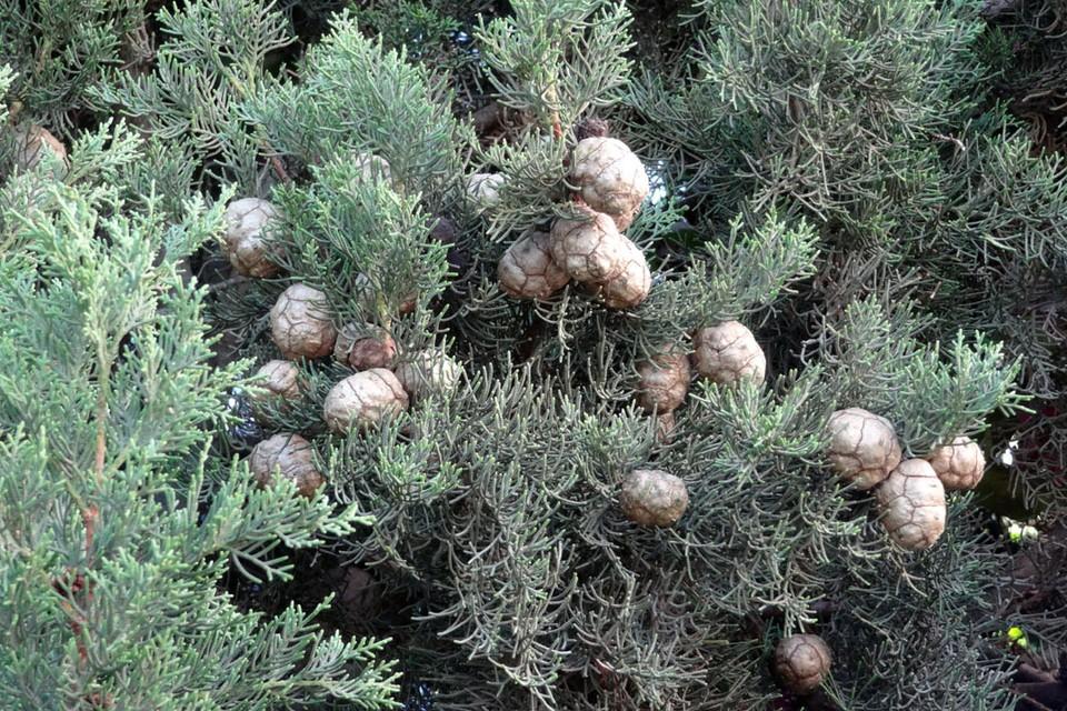 В Ишимском районе высадили 6 тысяч молодых елочек