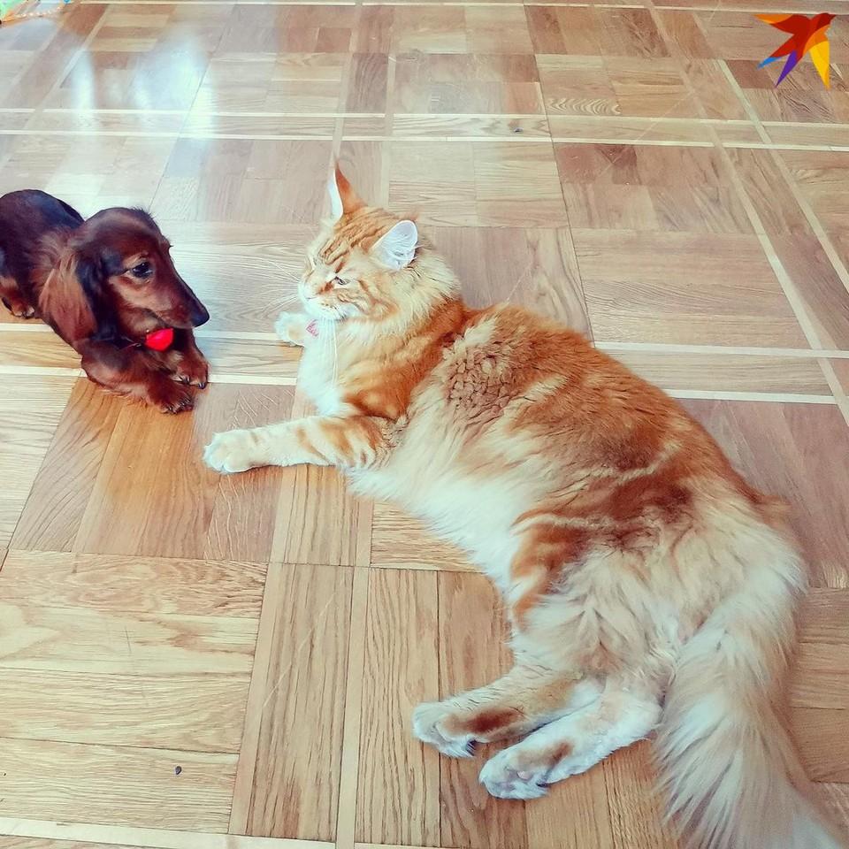Фото из Instagram-аккаунта кота Владыки