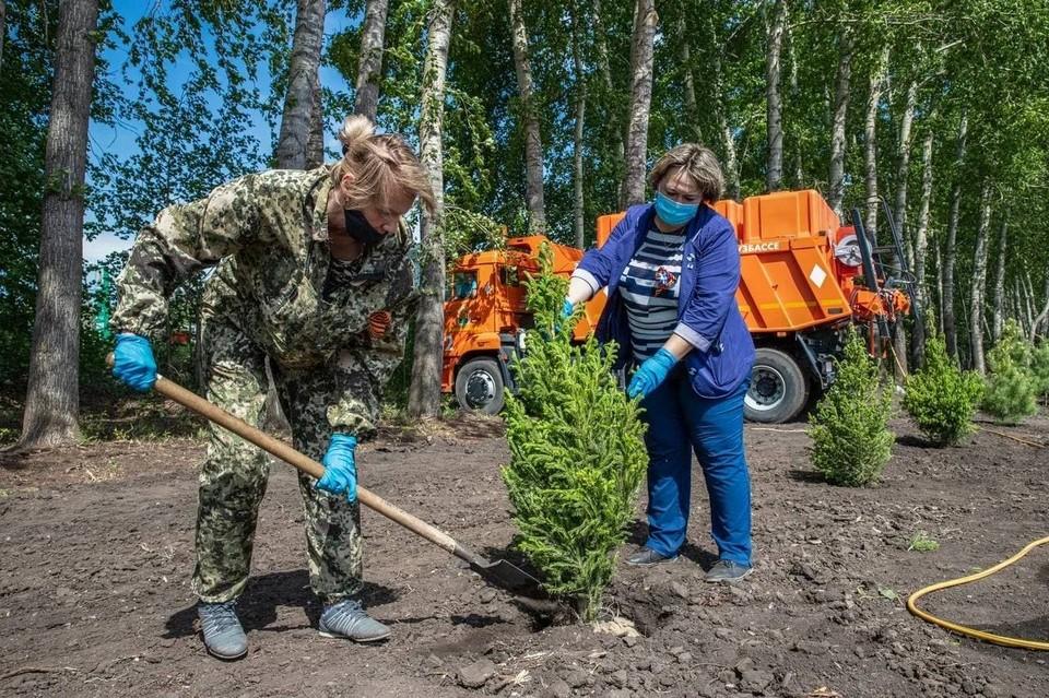 В регионе уже высажено 567,8 тысячи деревьев. Фото: пресс-служба АПК.