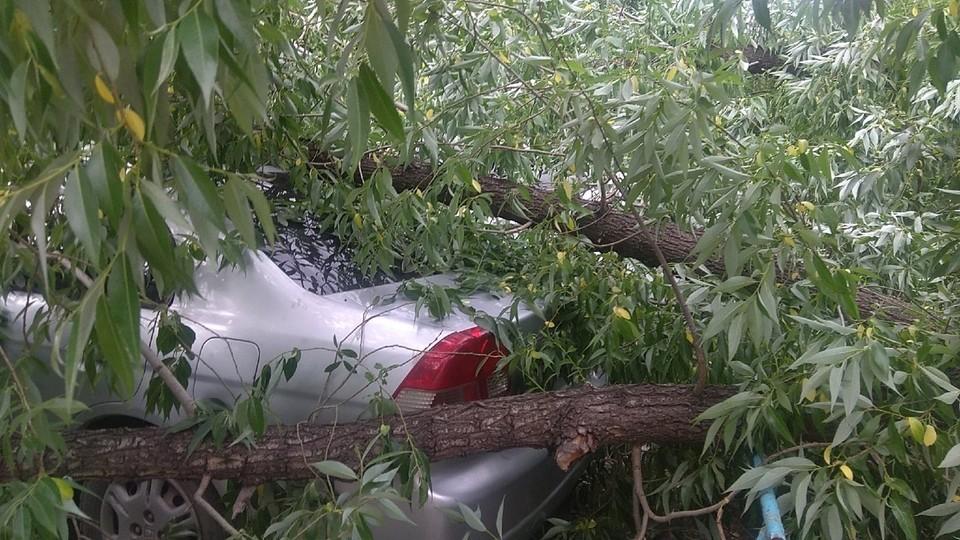 Ветками дерево задело припаркованные неподалеку машины.