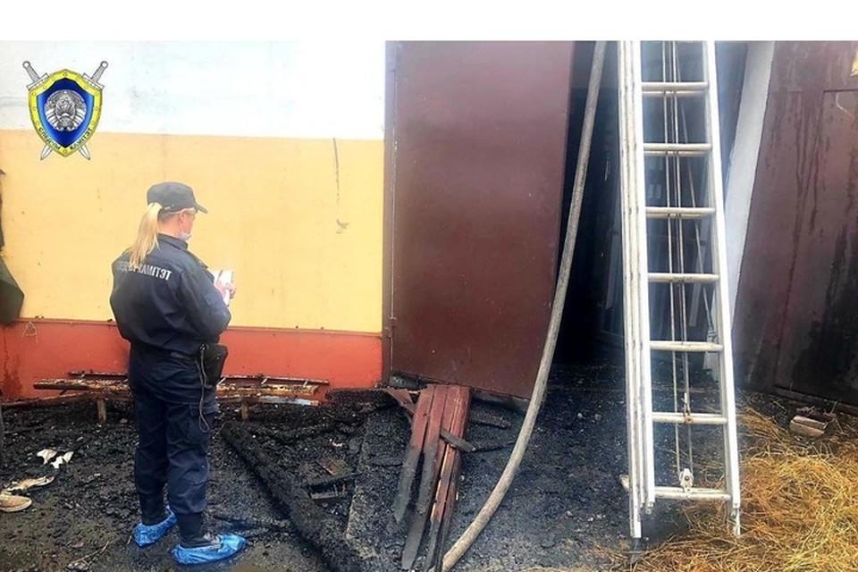 В Следственном комитете назвали причину пожара в конюшне в Ратомке. Фото: телеграм-канал СК