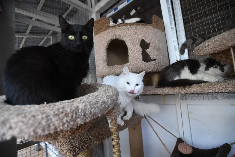 Окрас кошки — чаще всего вопрос эстетики