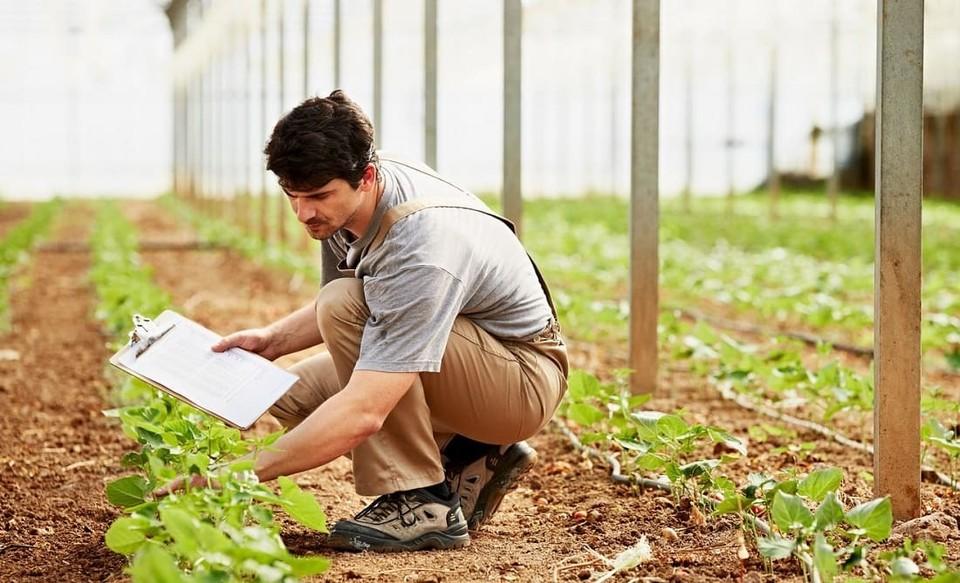 Россельхозбанк и «Иннопрактика» подготовят специалистов в сфере органического сельского хозяйства