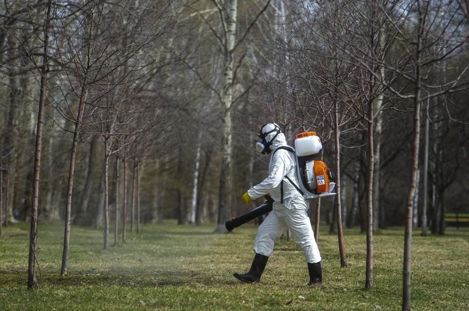 Жителям Кузбасса рассказали, почему не обрабатывают леса от клещей.