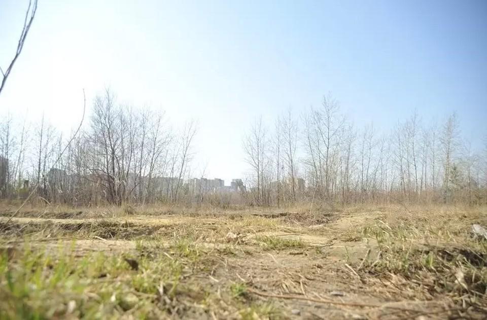 Так участок выглядел ранней весной.