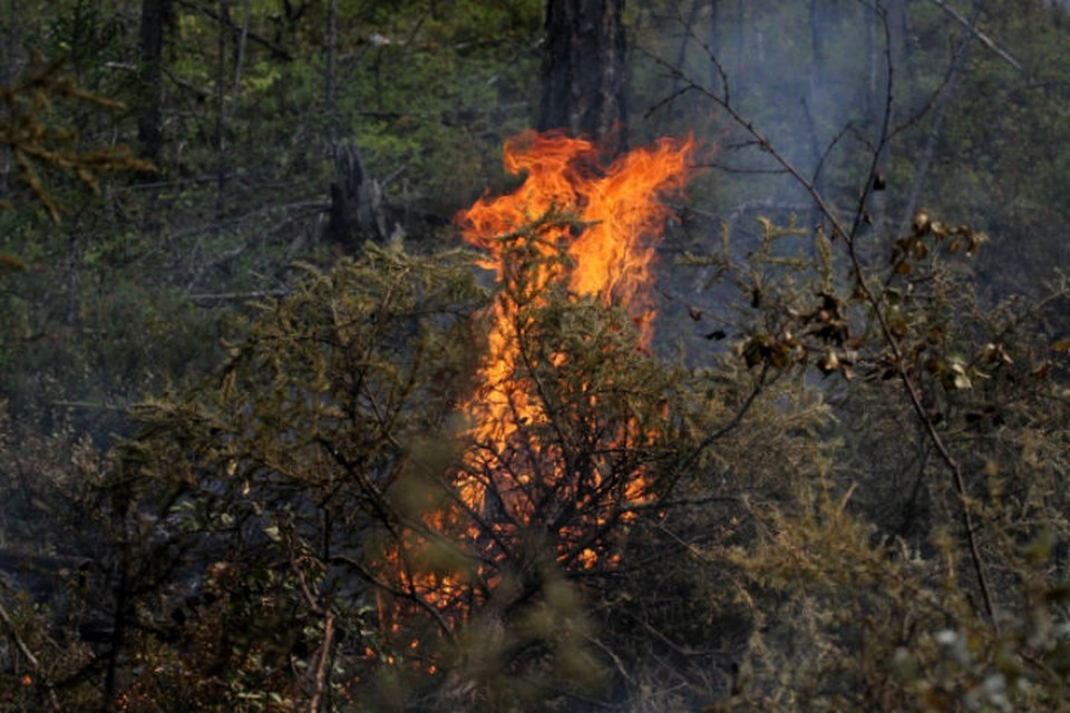Иркутская область вышла на второе место в стране по площади лесных пожаров